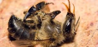dead-bee-791x382