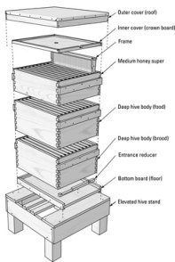 hive structure