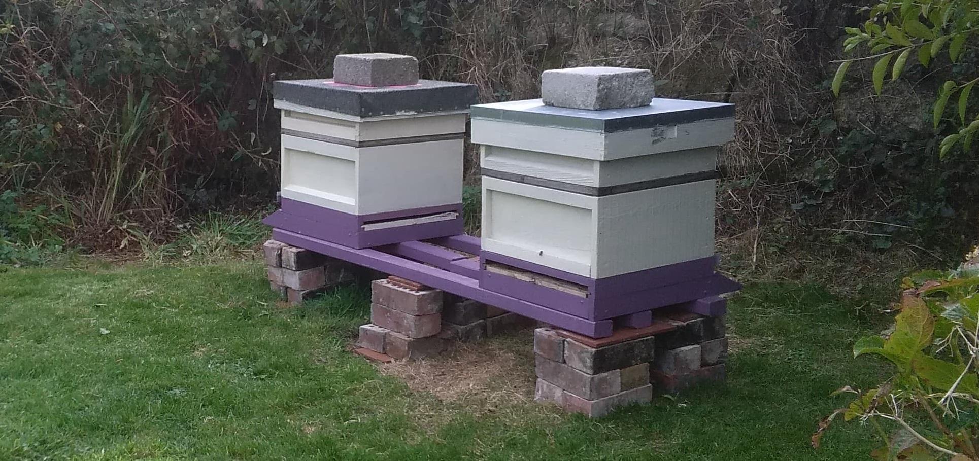 sennen two hives