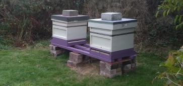 sennen two hives.jpg